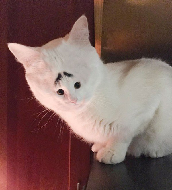 cats-with-tiny-faces-is-the-adorable-photoshop-battle-we-need-24-photos-219