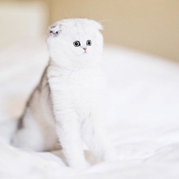cats-with-tiny-faces-is-the-adorable-photoshop-battle-we-need-24-photos-26